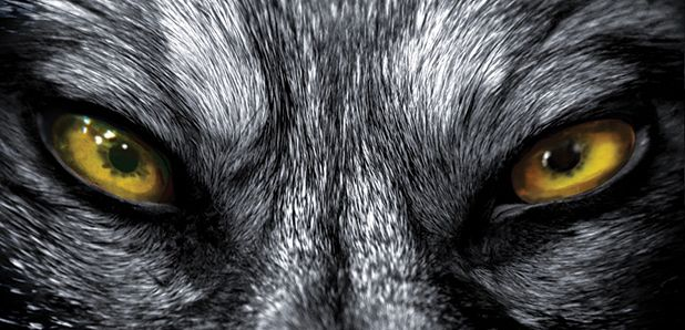THE DOGS OF THE STATUS-SEEKERS (Kursee de Kule)